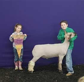 McGolden Club Lambs   Winners